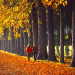 couple-walking-down-tree-line-in-France_DM thumbnail