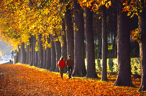 couple-walking-down-tree-line-in-France_DM