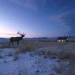 elk-standing-next-to-house-in-Montana205511-600x401_DM thumbnail