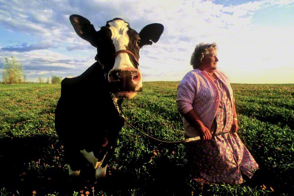 lady-with-the-cow-600x399_DM