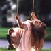 younggirlonswingleaningback05702-400x600_DM thumbnail