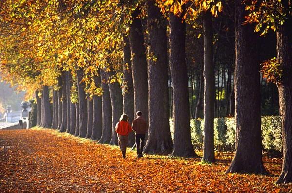 couplewalkingdowntreelineDM