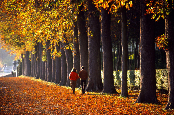 couple walking down tree line in France
