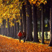 couple walking down tree line in France thumbnail
