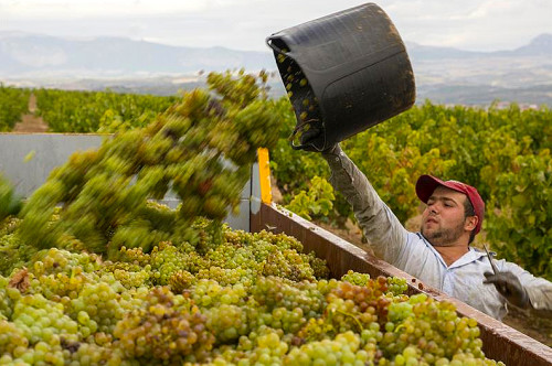 Shot by Ana in her vineyard.