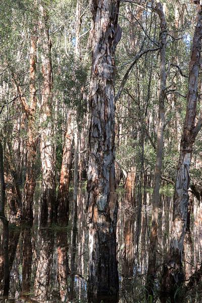 Paperbark-swamp_web-size