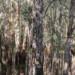 Paperbark-swamp_web-size thumbnail